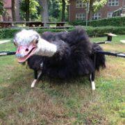 Квадрокоптер-страус и котодрон: когда не хватает экстравагантности