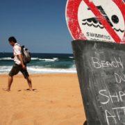 Дроны будут следить за акулами