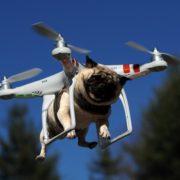 Квадрокоптер для выгула собак